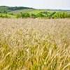 Запрет на экспорт зерна